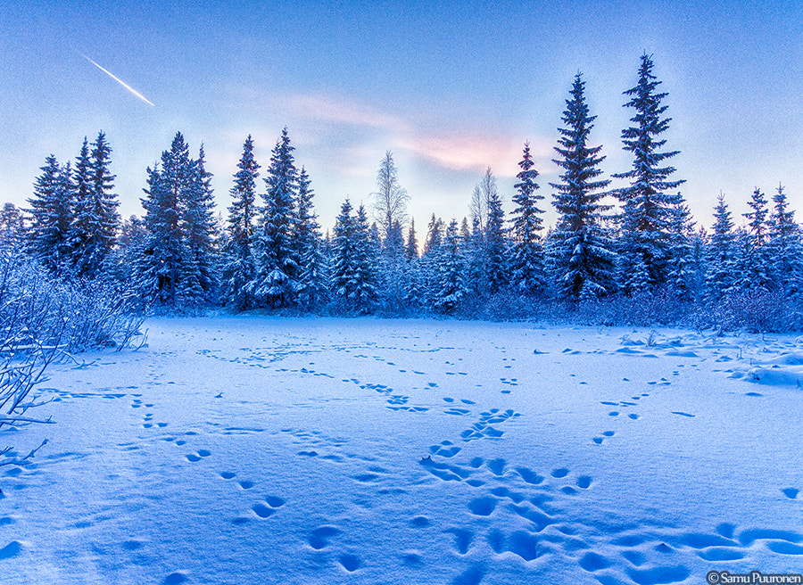 Photograph Winter Forest by Samu Puuronen on 500px