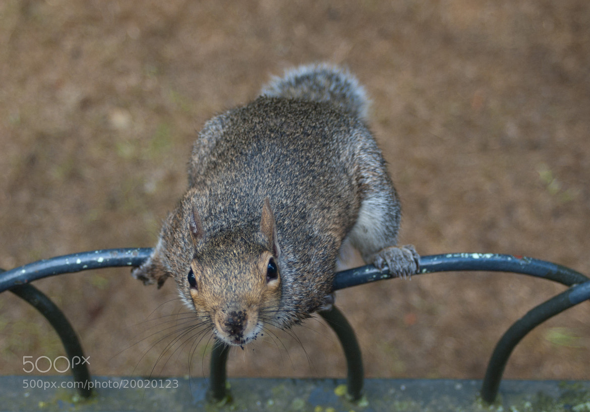 Photograph Squirrel attack by Sven Savic on 500px