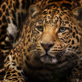 Leopard II by Denis Van Linden (DenisVanLinden)) on 500px.com