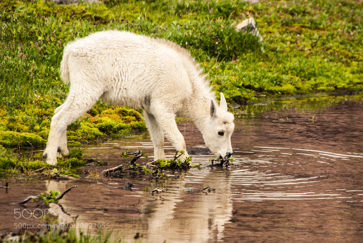 Photograph Eating with Ripples  by Joshua Pritchard on 500px