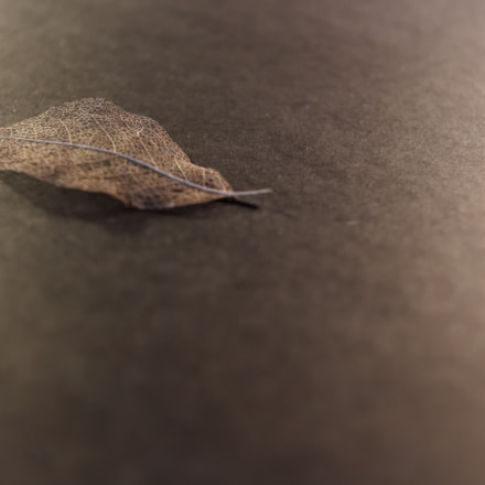 Leaf 2, Canon EOS 700D, Canon EF 28mm f/2.8