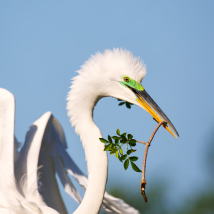 Egret, Canon EOS 5D MARK III, Canon EF 500mm f/4L IS