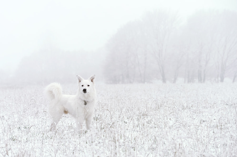 Photograph All White by John Nunney on 500px