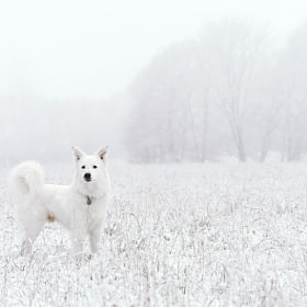 All White by John Nunney (JohnNunney)) on 500px.com