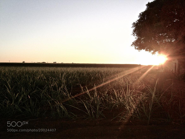 Photograph good morning sunshine by stephan sander on 500px