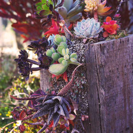Succulent Plant Assortment, Pentax K-M, smc PENTAX-DA 18-55mm F3.5-5.6 AL