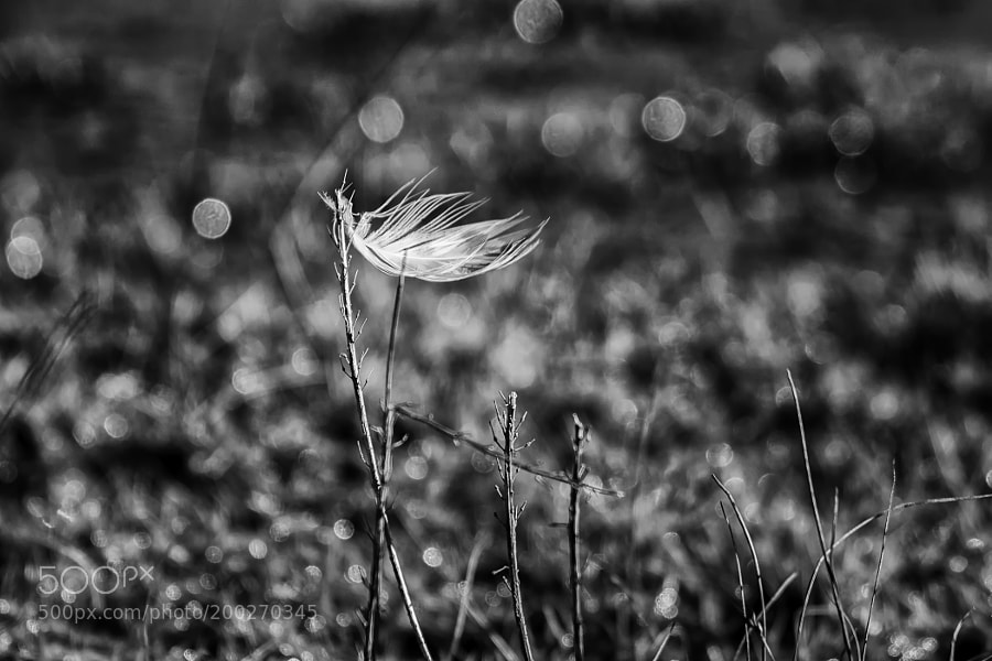 The little feather in the wind