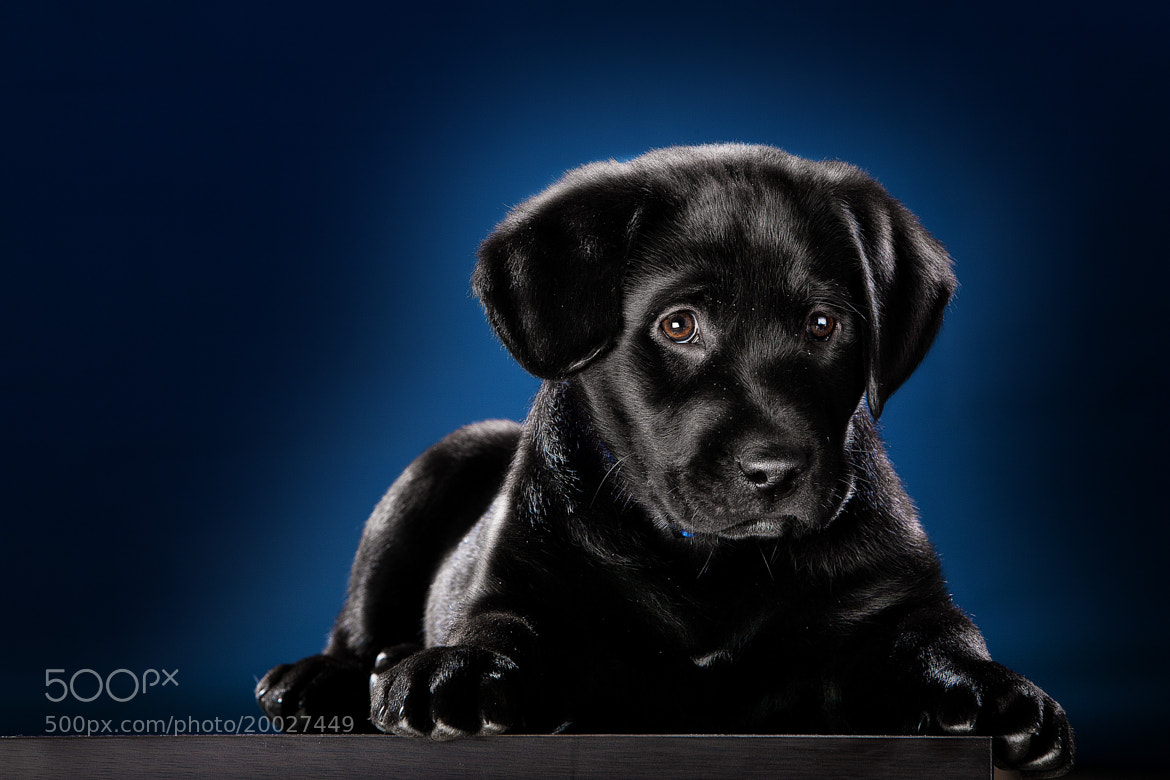 Photograph Toby by Alexis Cuarezma on 500px