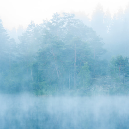 Forest in mist, Sony SLT-A77V, Sigma 70-300mm F4-5.6 DL Macro