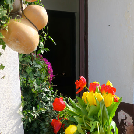 Tulips and marrows, Canon POWERSHOT G9 X