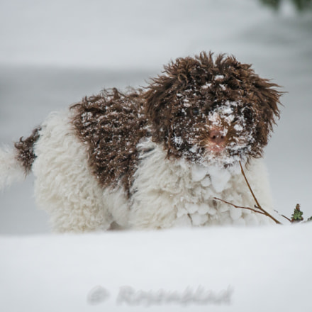 Snow fun, Nikon D800, AF-S Zoom-Nikkor 80-200mm f/2.8D IF-ED