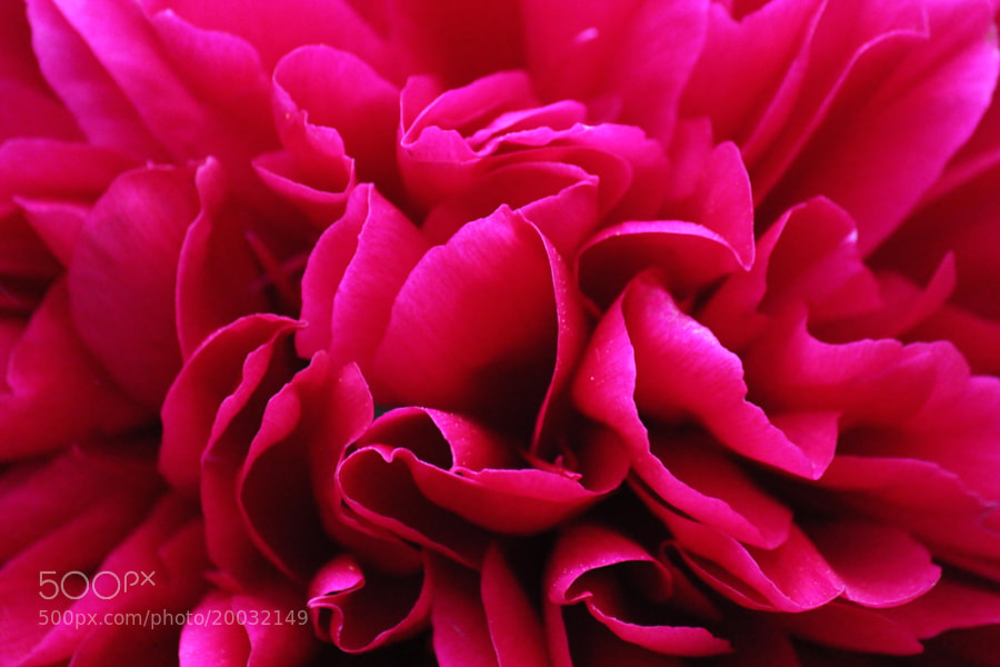 Macro Pink Flower by Andrew (smales)) on 500px.com