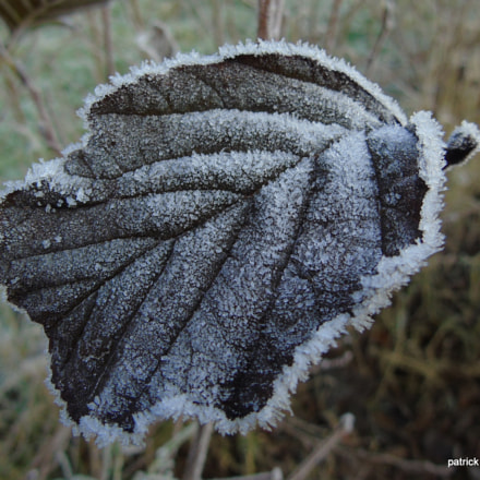 frost on a leaf, Sony DSC-H400