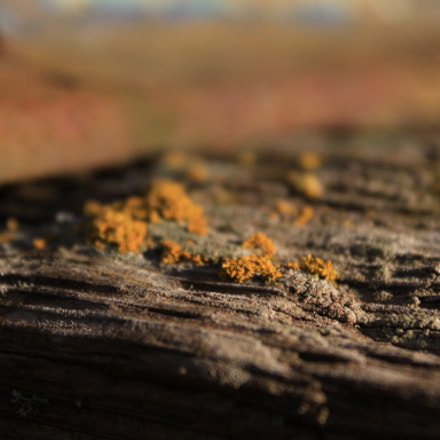 Lichen on wood, Canon EOS 500D, Canon EF-S 18-55mm f/3.5-5.6 IS
