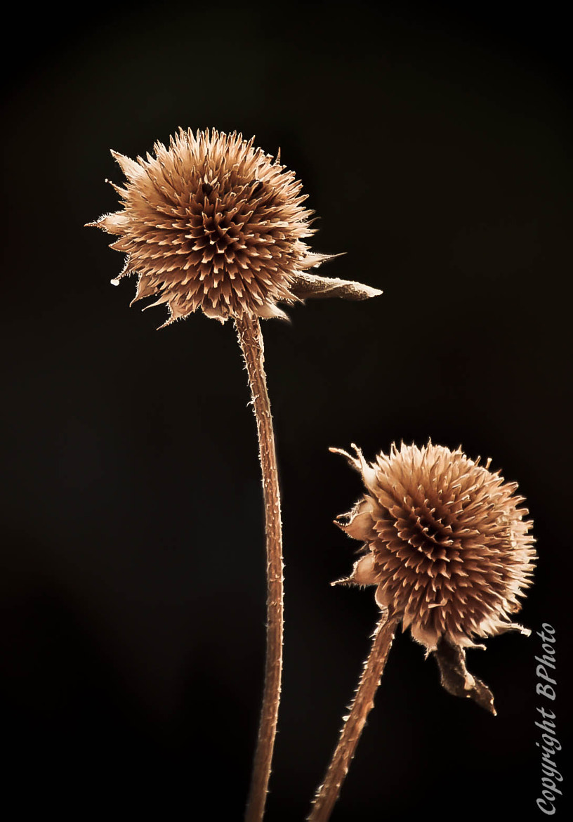 Photograph weeds by bob perkins on 500px