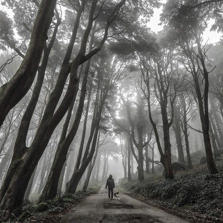 Mist, Canon EOS 5D MARK III, Canon EF 16-35mm f/4L IS USM