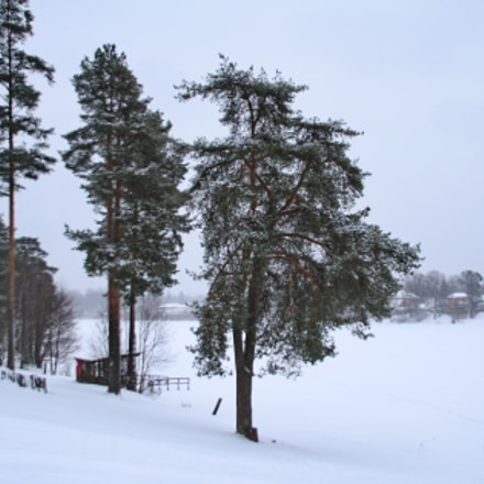 Snowday on the lake, Canon EOS 1000D, Sigma 18-200mm f/3.5-6.3 DC OS HSM [II]