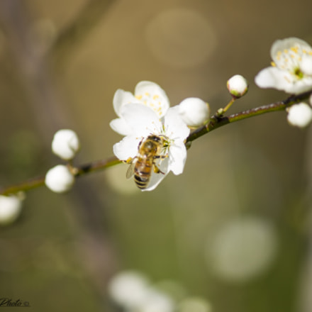 Nature., Canon EOS 1100D, Canon EF-S 55-250mm f/4-5.6 IS