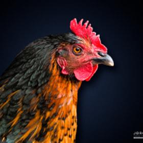 Chicken | Huhn