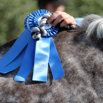 Blue Ribbon Horse, Canon EOS REBEL T3, Canon EF-S 55-250mm f/4-5.6 IS