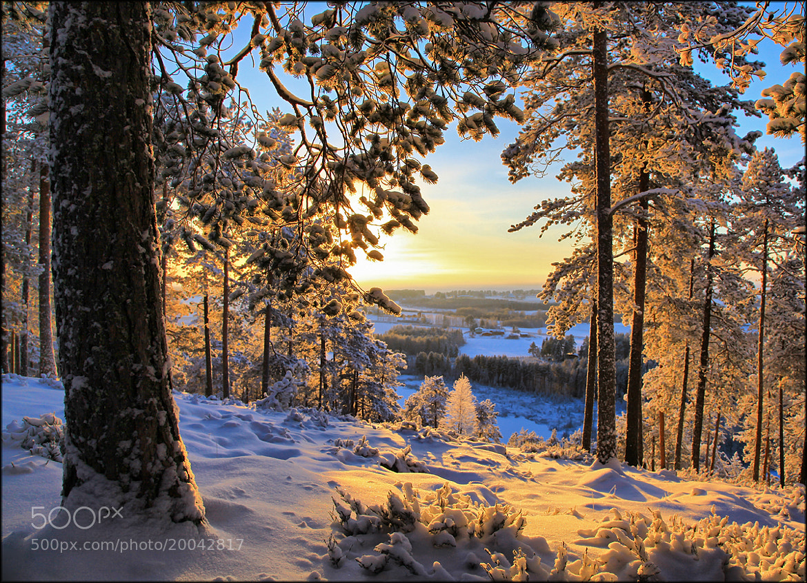 Photograph Winter Morning Finland ...  by Valtteri Mulkahainen on 500px