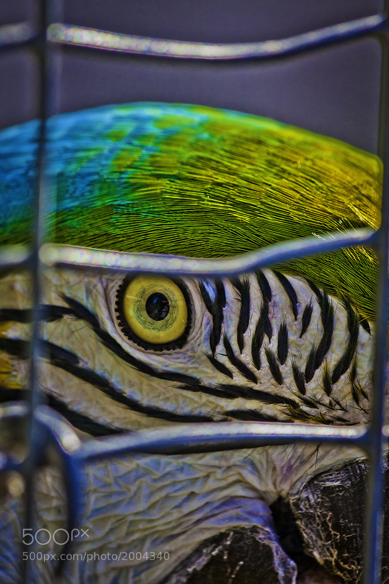 Photograph ... in a cage by Patrick //R on 500px