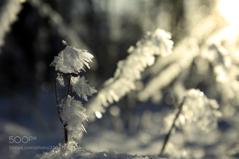 Photograph Snowlantern by Max Wiedenmann on 500px