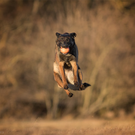 Jump for fun , Canon EOS 7D MARK II, Canon EF 300mm f/4L IS