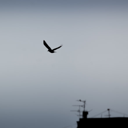 Flight, Nikon D3100, AF-S VR Zoom-Nikkor 70-300mm f/4.5-5.6G IF-ED