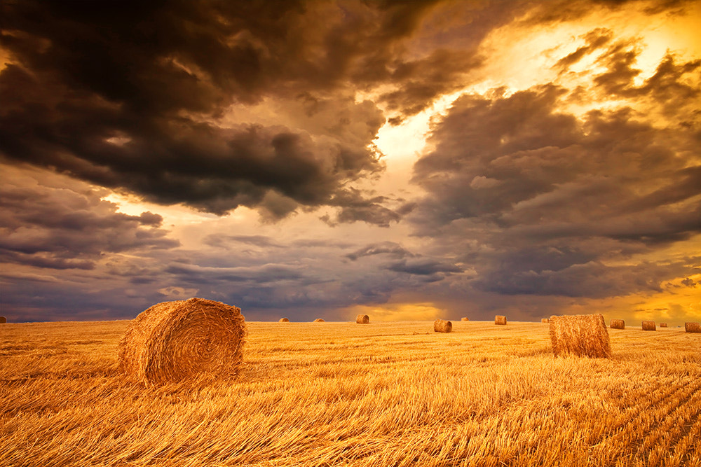 Photograph Field with hay bale by F Levente on 500px