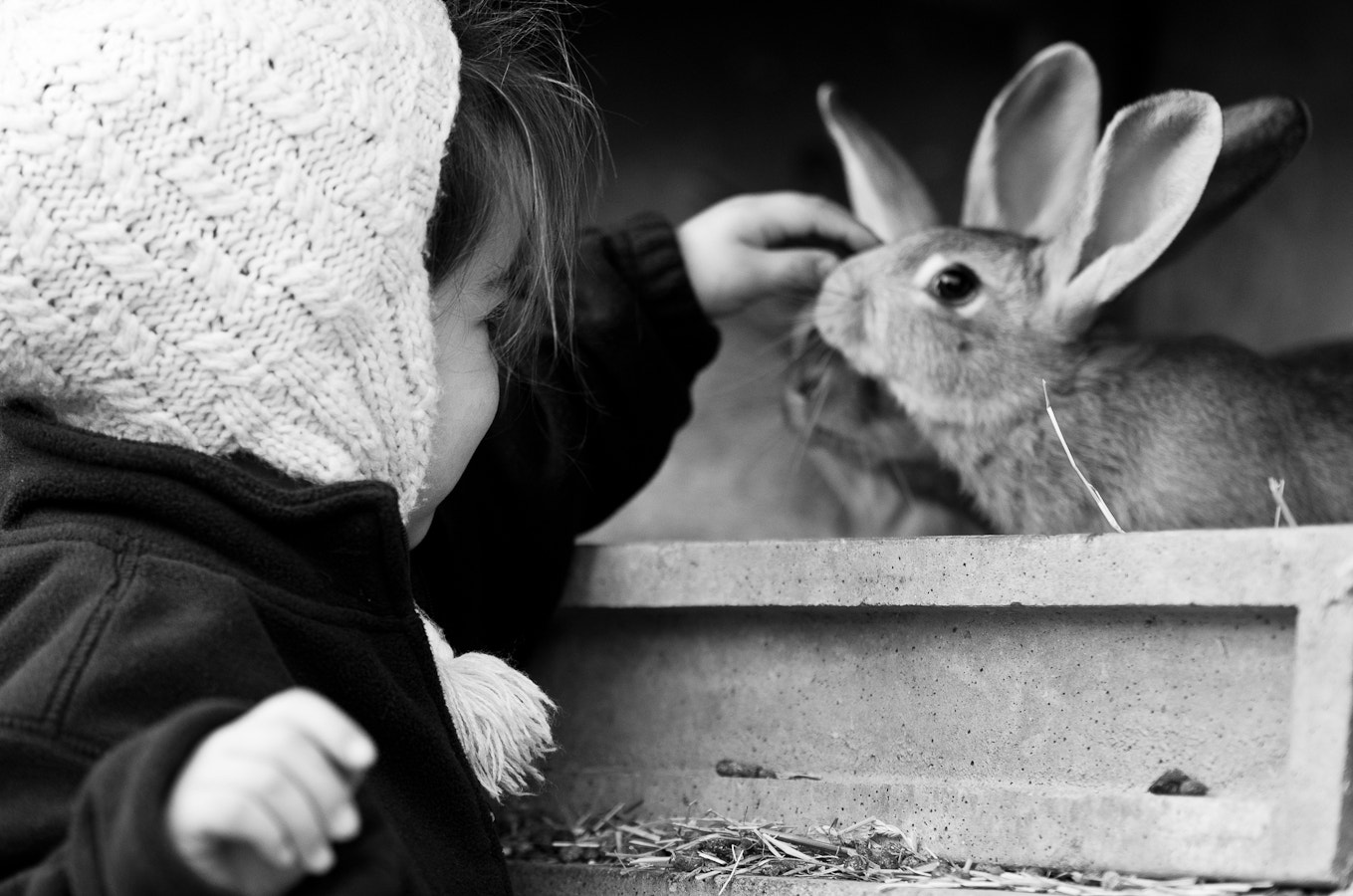 Photograph A rabbit's story by Mat Hieu on 500px