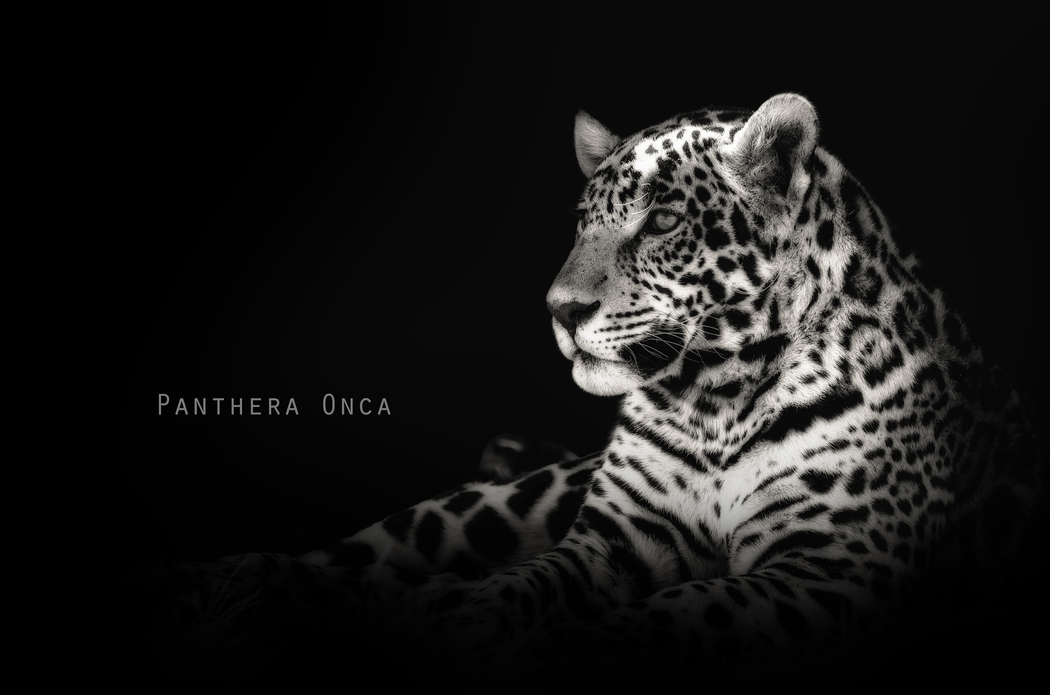 Photograph Panthera Onca by Omer Nave on 500px