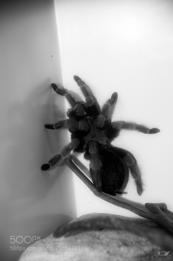 Spider 2 by Nono M. (EventphotoProd)) on 500px.com