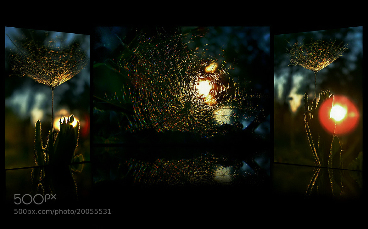 Photograph Cinema Effect by EMERALD WAKE © on 500px