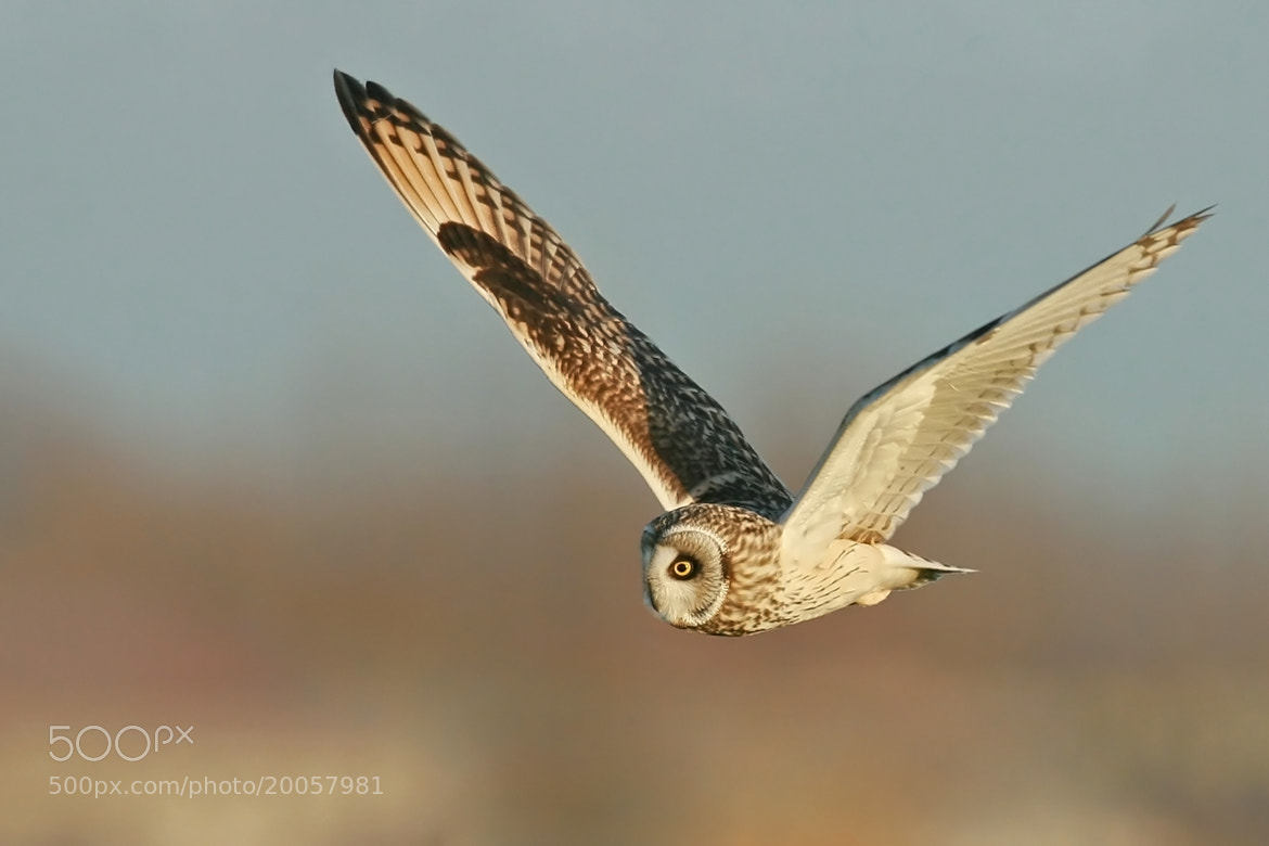 Photograph Fly by by Olivier Colle on 500px