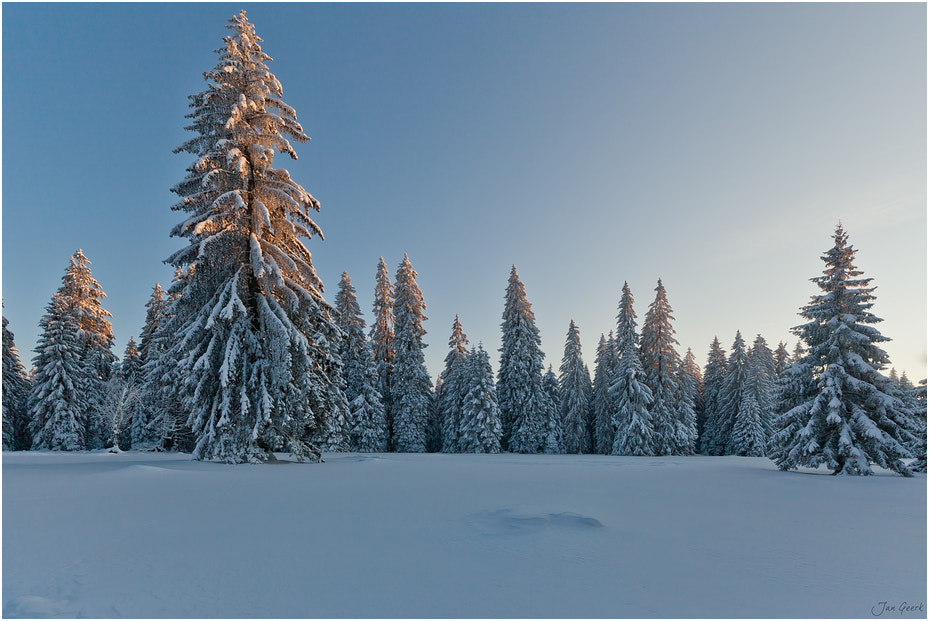 Photograph Land of Christmas Trees by Jan Geerk on 500px