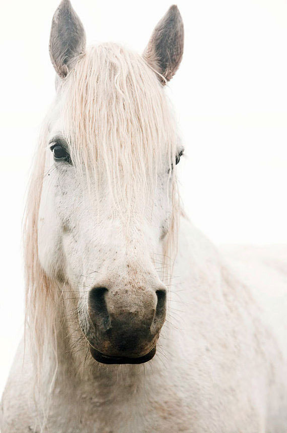 Photograph White Horse by Jennifer Meyers on 500px