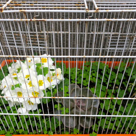 Flowers in a cage, Canon POWERSHOT G9 X
