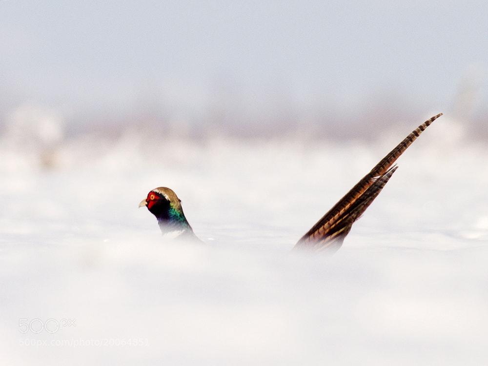 Photograph Untitled by Zoltán Túri on 500px