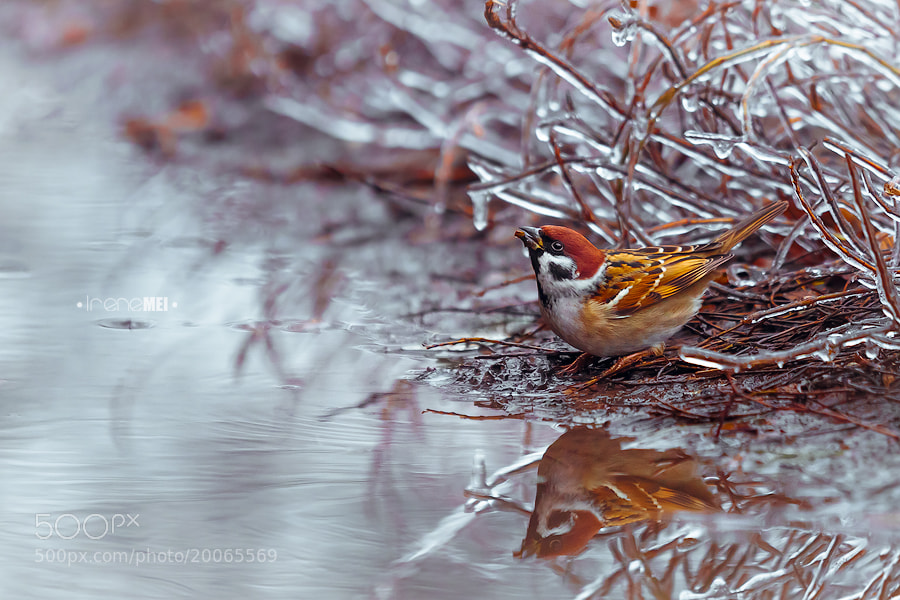 Photograph Cold Water by Irene Mei on 500px
