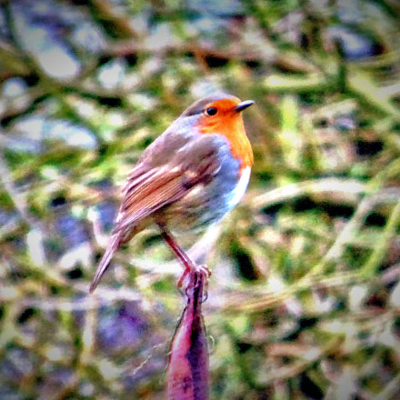 Robin in Pole Position, Sony DSC-HX60V