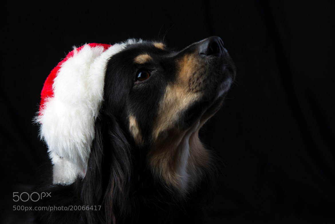 Photograph I've been a good dog all year... by Martin Cauchon on 500px
