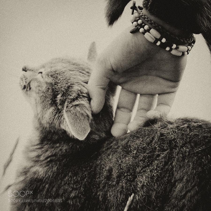 A Cat Is a Cat II by Jens Klettenheimer