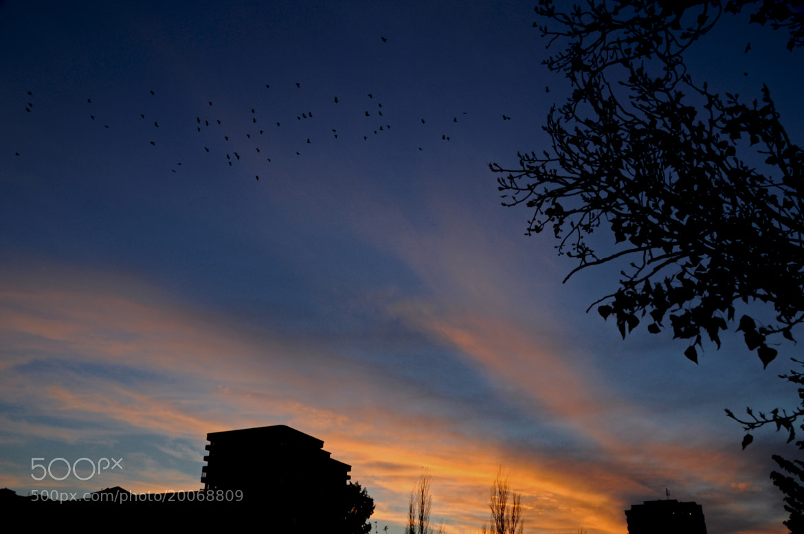 Photograph Bird migration during the sunset by Rasul Guliyev on 500px