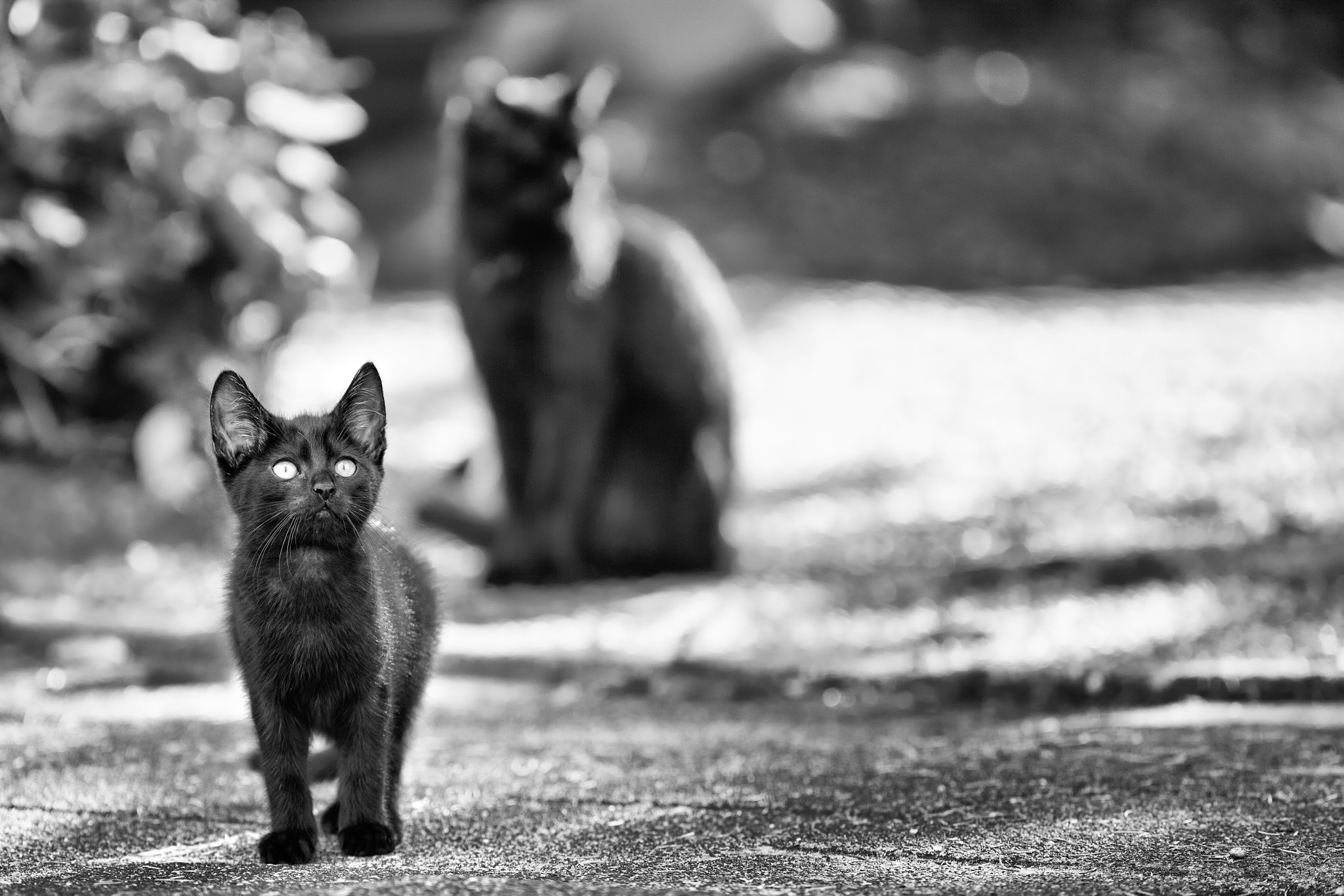 Photograph Mother does not see by Andreas Klesse on 500px