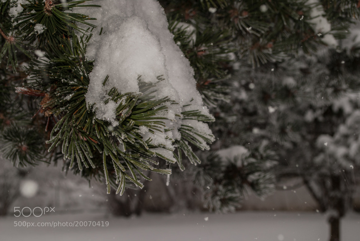 Photograph Snow is falling by Andy Vobiller on 500px