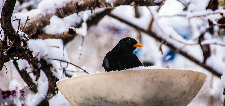 Photograph Take a bath of snow..... by Daniela Niederbauer on 500px
