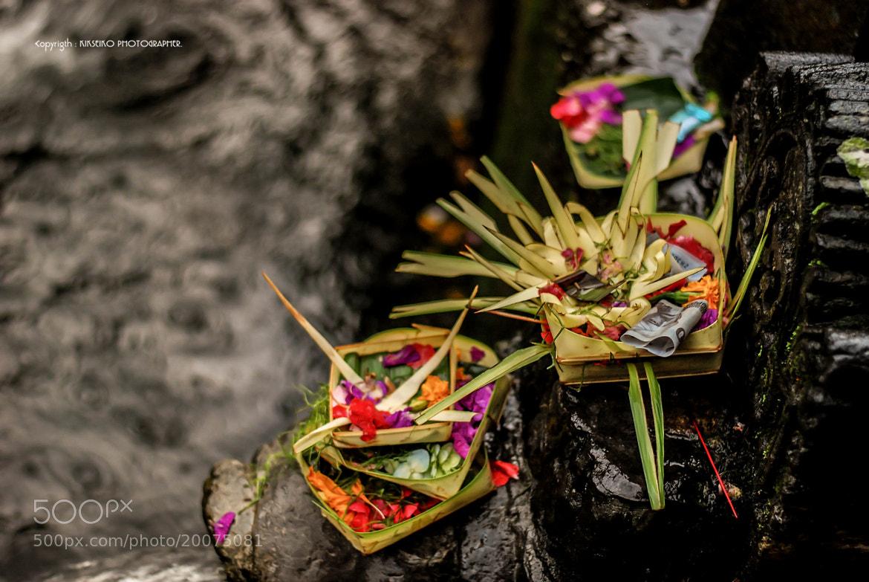 Photograph Flower by Kik Seiko on 500px