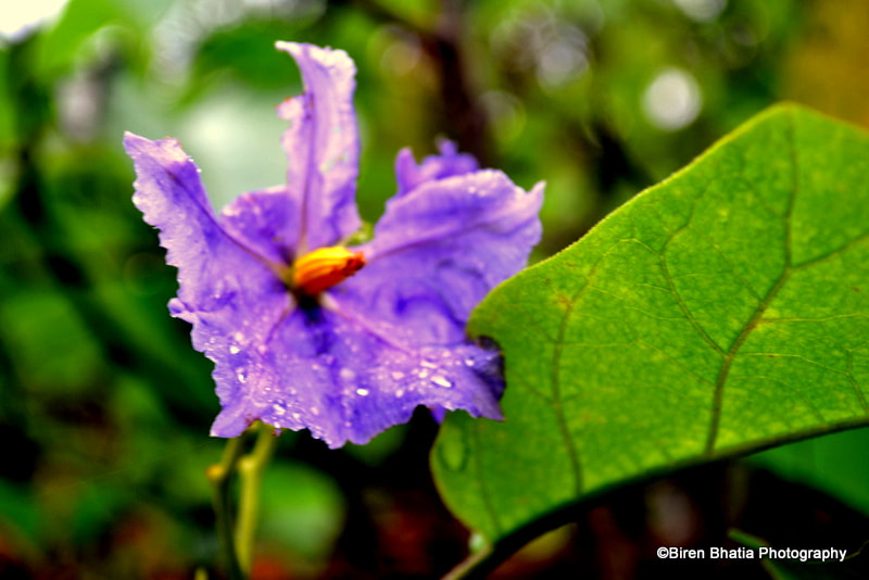 Photograph The violet ecstasy by Biren Bhatia on 500px