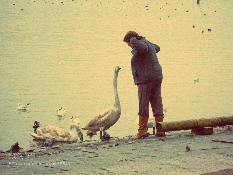 Photograph Il lago dei Cigni~ by Meri Grandi on 500px